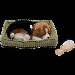 home - PP Beagle